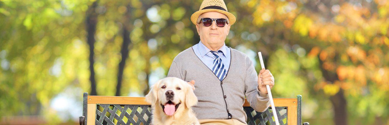 Idoso em um parque com seu cão guia e bengala guia